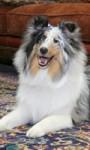 Ob Ihre Mieter Hunde halten dürfen, regeln Sie ausschließlich im Mietvertrag …