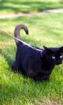 Für Katzen kein Leinenzwang im Mehrfamilienhaus