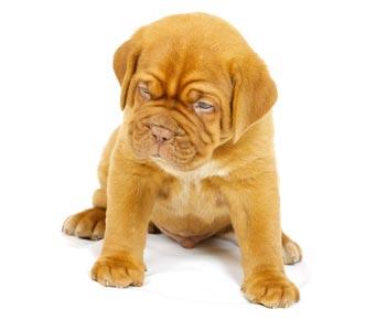 Dürfen Vermieter Haustiere per Vertrag verbieten?