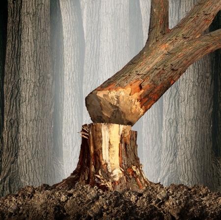 Der Baum muss weg – Was muss ich als Vermieter wissen?